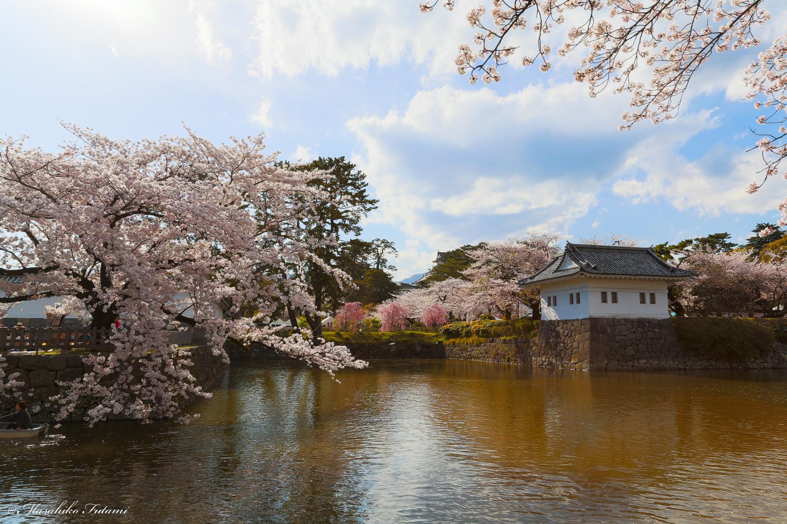 Sakura Landscape