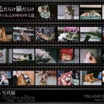 坂崎幸之助さん書写真展 / けっこう毛だらけ猫だらけへ
