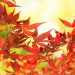 心トキメク日本の伝統色・和色 10 選