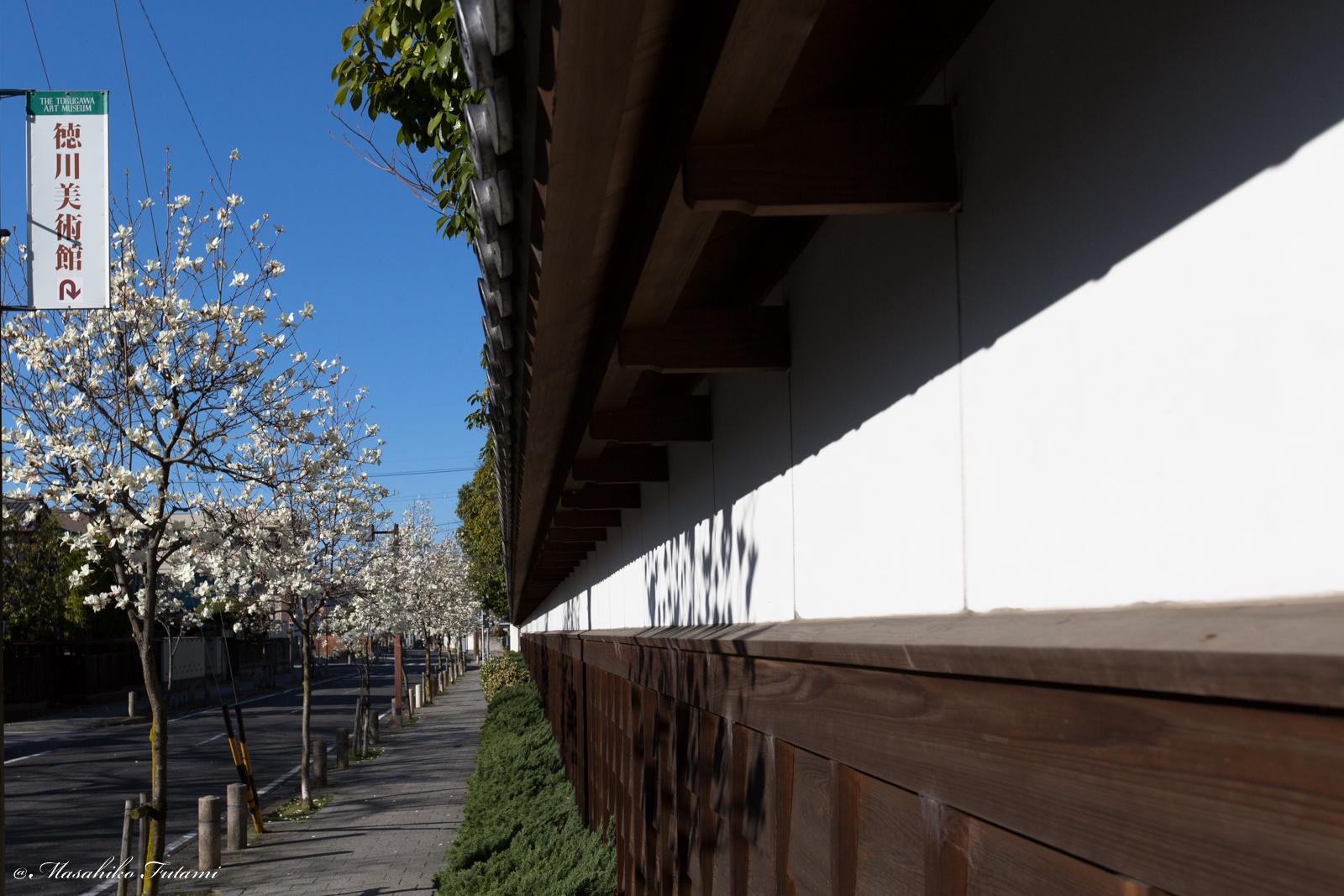 Magnolia Blossom and Tokugawa Art Museum