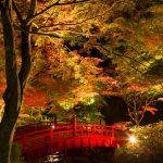 紅葉色付く秋の日本を感じ風流に自己の内側を描写する